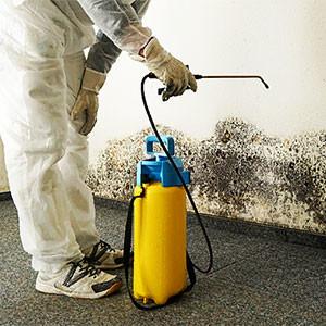 Избавиться от плесени в квартире на потолке, стене или полу своими руками