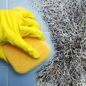 Избавиться от плесени в ванной и туалете своими руками